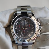 Rolex Daytona White gold 40mm Grey Arabic numerals United States of America, California, Sunnyvale